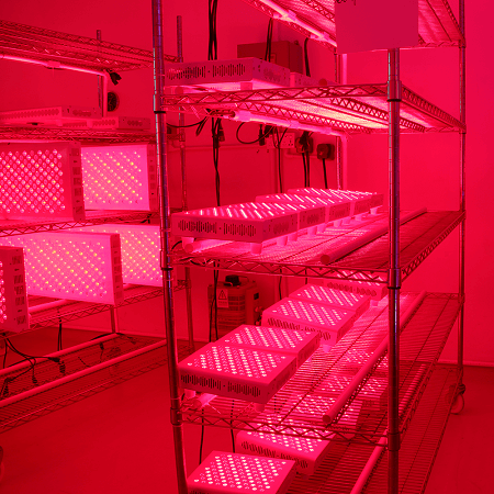 red led light therapy devices test